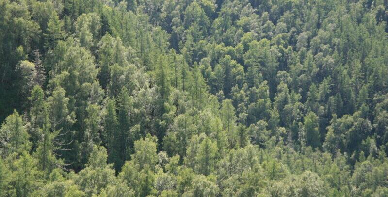2014 ICCOMMS Russia Siberia NAT forest cFSC Gd MilanReška 0012 scaled e1599742773281 Unsere Verantwortung